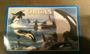 Orca 3 of hearts